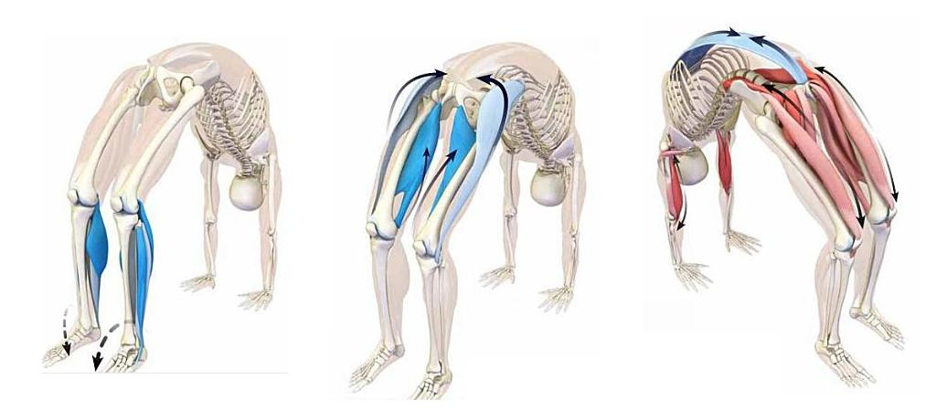 hip flexor groin stretches